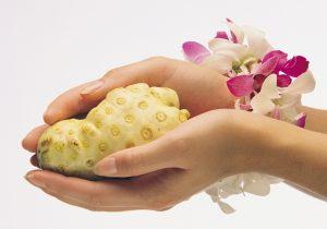 Noni Frucht