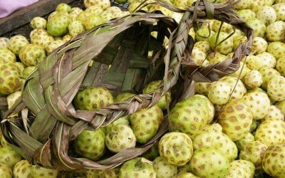 Die Noni-Frucht